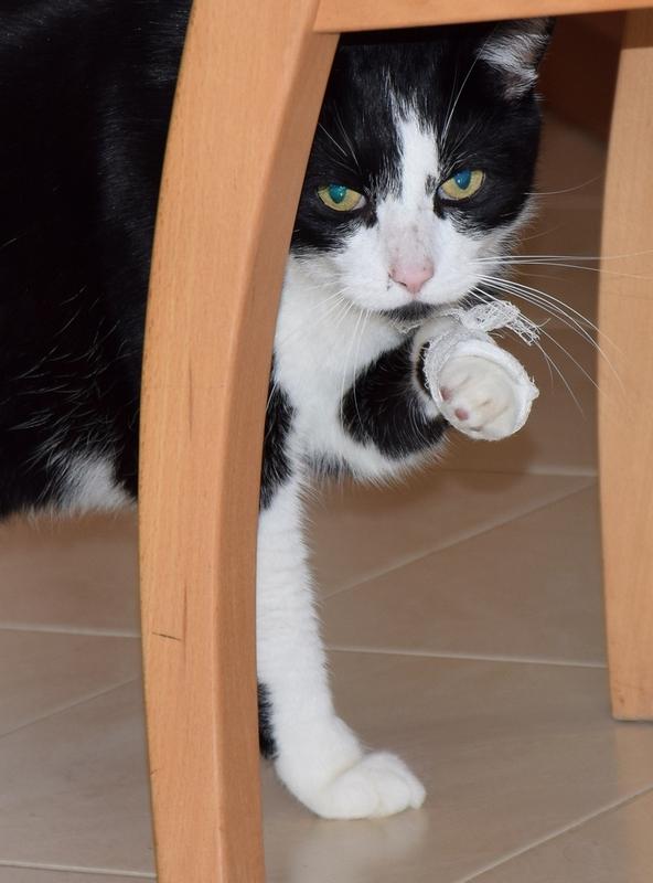Cat's leg