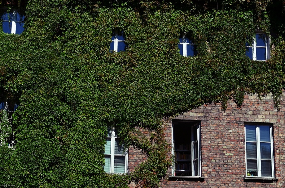 windows & green wall